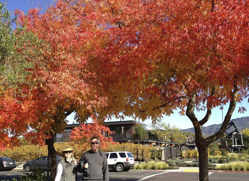 Snapshot of a Man and Woman under Fall Colored Leafy Trees